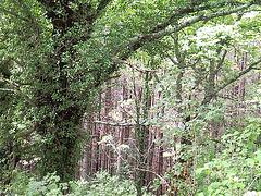 Bosque en el monte de Muskilda (Navarra)