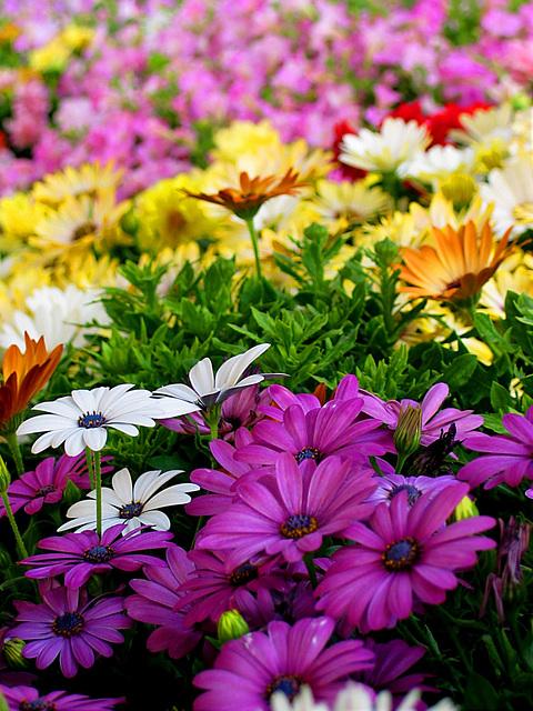 Blumen auf dem Markt in Salzburg