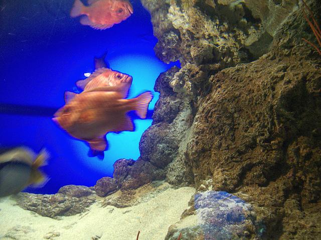 Orange fishies