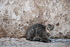 Almada Cat