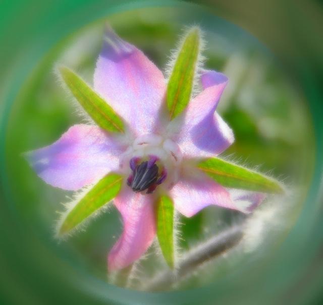 Caresse  d'une fleur.....pour une f et e