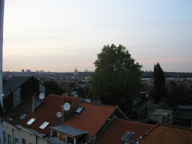 Schaerbeek: Les arbres les plus grands...