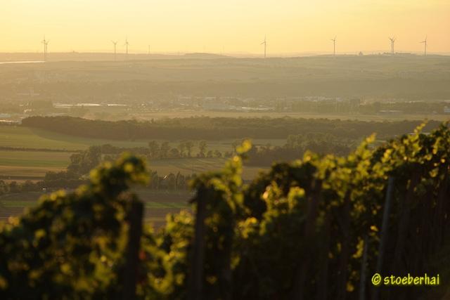 View from Schwanberg vineyards to Dettelbach