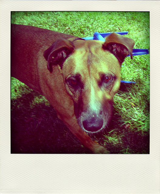 Colby (3353) - Poladroid