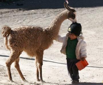 Enfant et lama, Bolivie