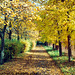 Fall Colors, Picture 22, Edited Version, Haje, Prague, CZ, 2013