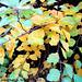 Fall Colors, Picture 27, Edited Version, Haje, Prague, CZ, 2013
