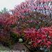 Fall Colors, Picture 29, Haje, Prague, CZ, 2013