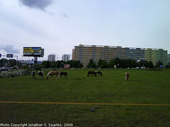 Horses in Sidliste Krc, Prague, CZ, 2009