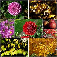 Herbst - Blumen - Blätter - Früchte
