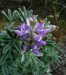 Flower (3740)