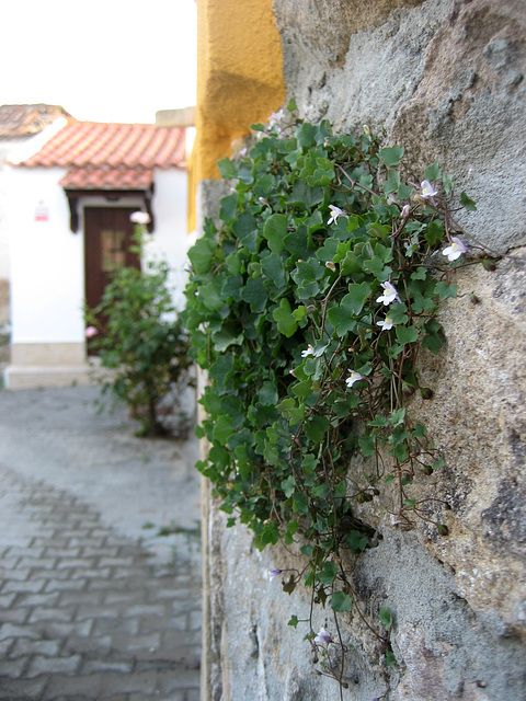 A-dos-Ruivos, country house, the garden begins on the wall (1)