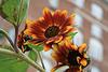 Sunflowers.16P.NW.WDC.22September2009