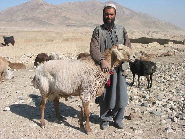Un Berger en Afghanistan