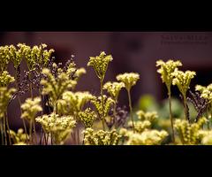 Més herbetes :: HBW