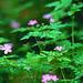 Blomster i skoven. - Gareth McCormack