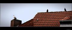 watching the watcher (pip)