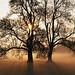 Får under et træ nær Dorset, England. - Jeremy Walker