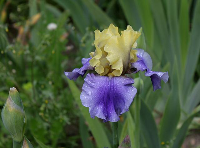 Iris Edith Wolford