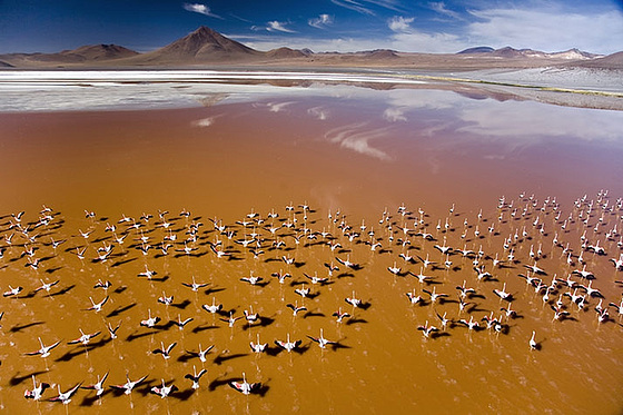Nuée de flamants roses en Bolivie