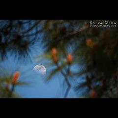 La Lluna entre rames