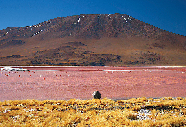 Laguna Colorada, Salar de Uyuni, Bolivie