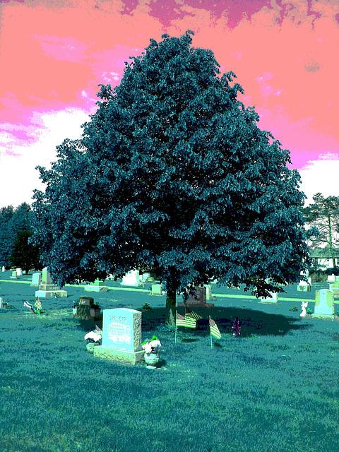 Cimetière St-Charles / St-Charles cemetery -  Dover , New Hampshire ( NH) . USA.   24 mai 2009 - Spencer. RVB  postérisée