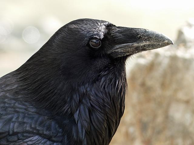 Details in black