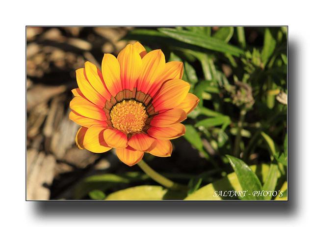 Nature's Beautiful Flower.