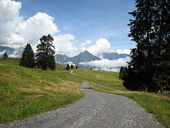 IMG 2680 Alp Tannenboden