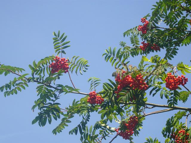 Rot-Grün und blauer Himmel