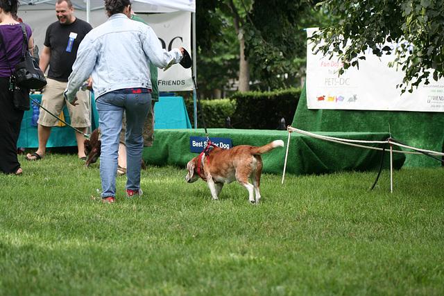 66.PrideOfPetsFunDogShow.Dupont.WDC.21June2009