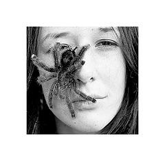 """l'Aventura"""" ou le baiser de la femme araignée"""