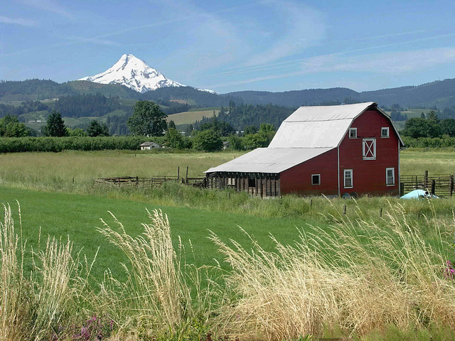 PICT2033ac Typical American Barn with Mt Hood in the Distance