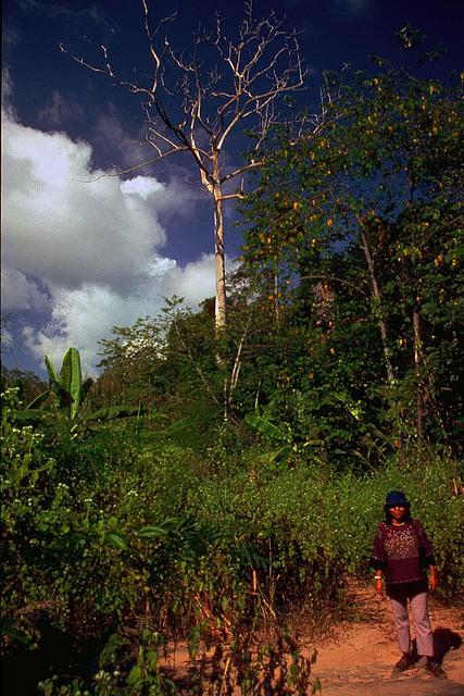 Walking through the jungle ...