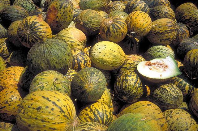 Kavunlar - Melonen
