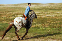 Mongolian horse rider boy