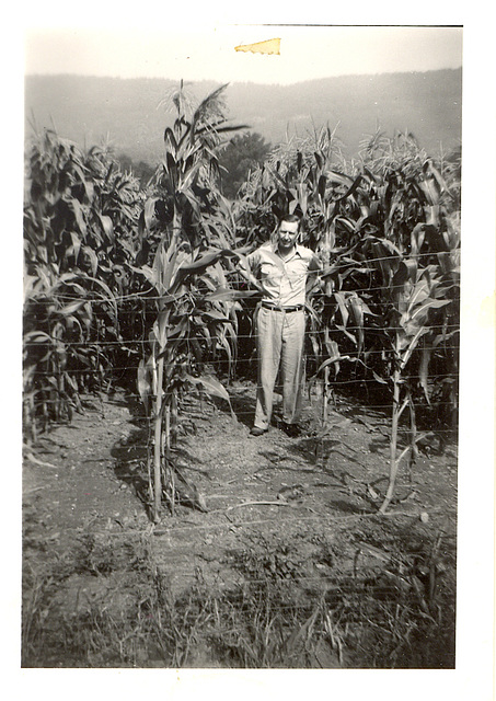 Mary's Uncle, Otto Grayson, in his corn field near Lynchburg, TN, c. 1960