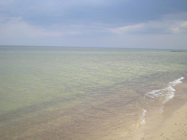 Balta Maro