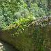 Fortika muro