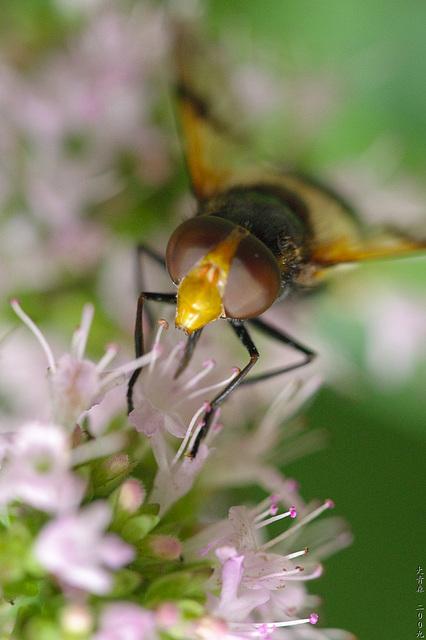 Andere Biene (vorne)