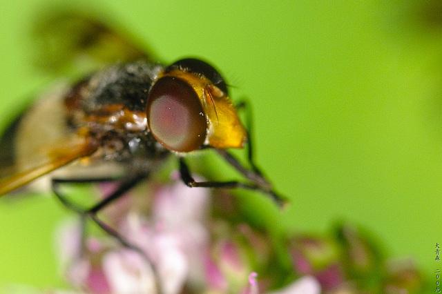 Andere Biene (Seite)