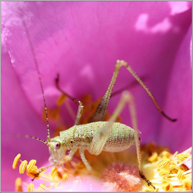 Annäherung an ein Insekt