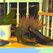 Vitrine et banc podoérotique / Bench footwears window display.   Copenhague  / Copenhagen.  26-10-2008- Postérisation photofiltrée