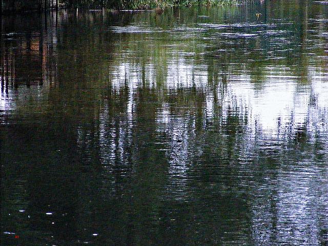 Fordingbridge waters