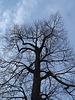 Arbre majestueux / Majestic tree
