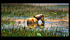 the magic lotos horse