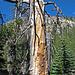 Devils's Postpile National Monument (0499)