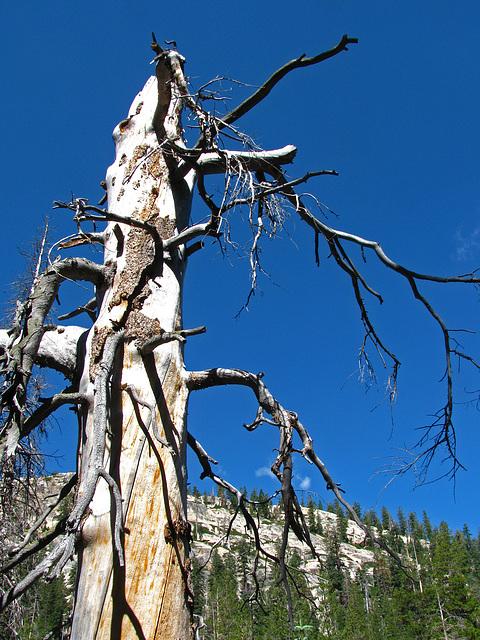 Devils's Postpile National Monument (0501)