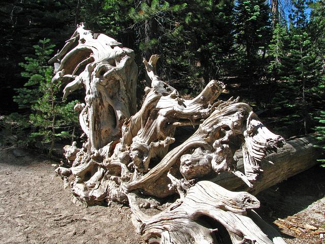 Devils's Postpile National Monument (0515)
